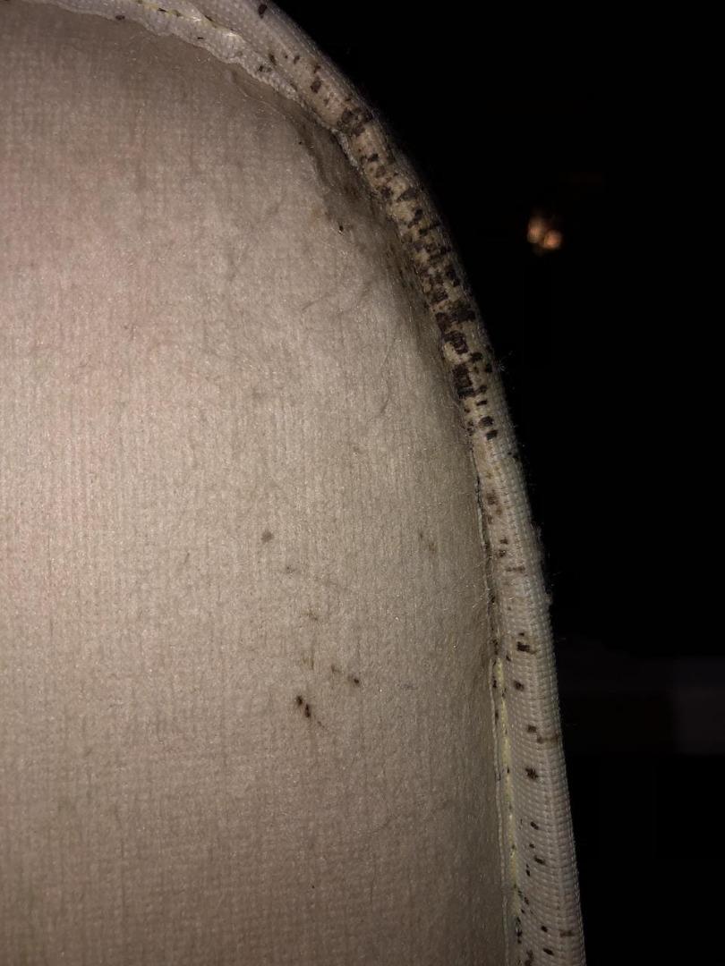 Nashville bed bug fecal spotting
