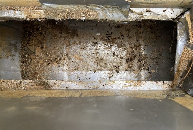bed bugs in dirty Nashville air duct