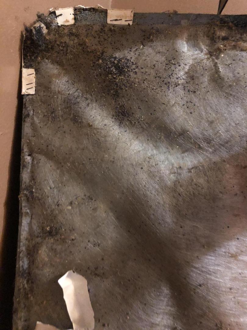 heavily infested Nashville box spring mattress
